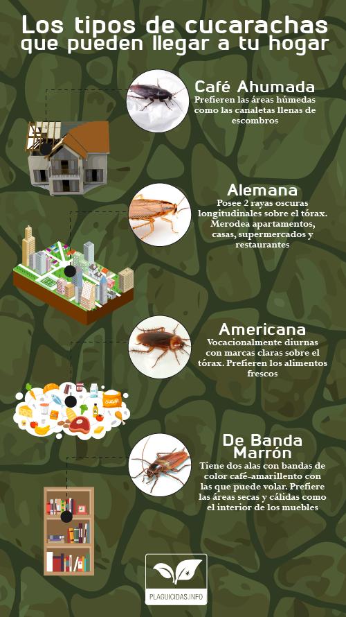 cucaracha-01