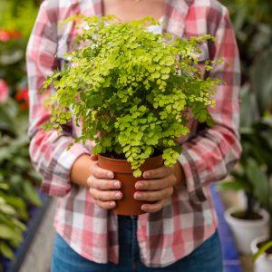 plantas caseras